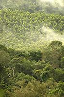 Floresta de Eucalipto(2ºplano),  gênero de arbustos ou árvores de grande porte, da família das mirtáceas, usado  para plantio de extensas áreas de espécie para posterior produção de de papel e celulose  (grupo Orsa).<br />A fábrica da Jarí em local próximo,  onde é beneficiada a madeira, foi construída em cima de uma balsa e trazida por empurradores do Japão no final da década de 70 e instalada as margens do rio Jarí, fronteira do Pará com o Amapá.<br />Almeirim, Pará, Brasil.<br />Foto Paulo Santos/Interfoto<br />03/2005.