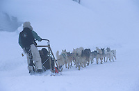 Europe/France/Rhône-Alpes/74/Haute-Savoie/Avoriaz: randonnée en traineau à chien