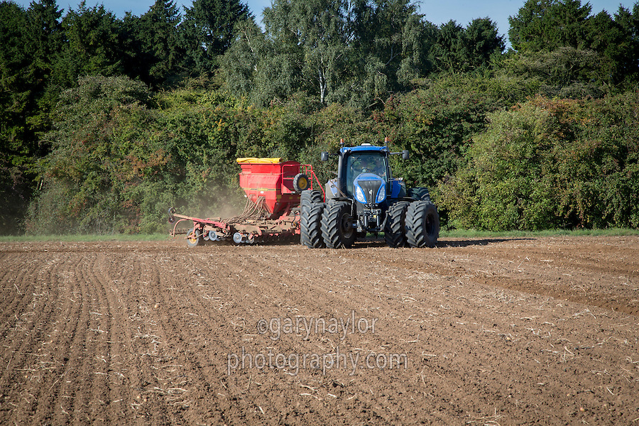 Drilling winter wheat into ex potato land with New Holland tractor fitted with front & rear duals and 6m Vaderstad drill