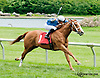 Truman's Commander winning at Delaware Park on 6/6/13