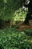 Ross Hall Park in spring, Glasgow<br /> <br /> Copyright www.scottishhorizons.co.uk/Keith Fergus 2011 All Rights Reserved