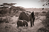 Elephant mother and calf in Samburu National Park, Kenya