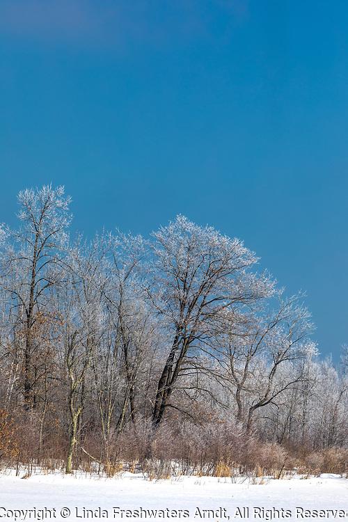 A February hoar frost in northern Wisconsin.