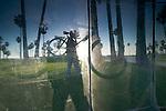 Cyclist & palm trees reflected in a window, Venice Beach, California, USA