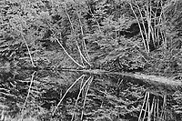 Reflection of trees along a river, Mactaquac, New Brunswick, Canada