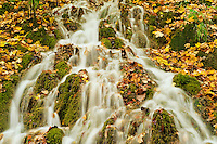 Water running through the forest around Gradinsko lake, Upper Lakes, Plitvice National Park, Croatia