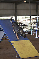 Mobile Bay Dog Training Club, agility trials.