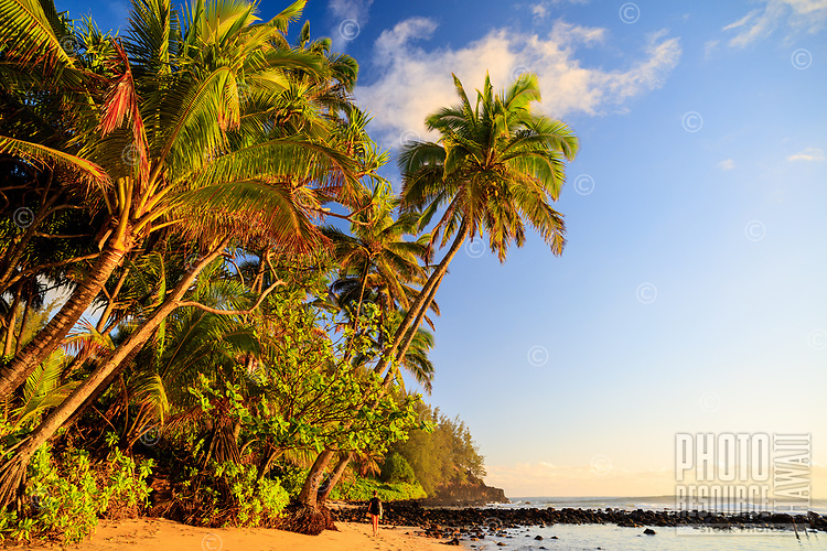 A lone surfer walks with her surfboard under a coconut palm tree at Waikoko's Beach in Hanalei, Kauai.