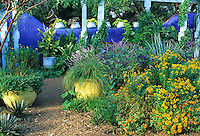 Patterened after the Morocan garden of Marjorelle, containers painted  pale yellow or  pale blue and planted with grasses or yellow-leaved sweet potato vines serve to accent the blue walls in the demo garden designed by Mike Shoup at the Antique Rose Emporium in San Antonio, Texas.