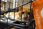 Best Friends Pet Super Adoption Event in New York City