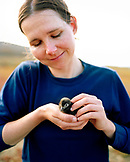 MEXICO, Baja, smiling mid adult woman holding Cassin's Auklet Chick, San Benitos Islands