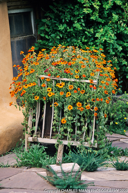 Susan Blevins of Taos, New Mexico, created an elaborate home garden featuring containers, perennial beds, a Japanese themed path and a regional style that reflectes the Spanish and pueblo architecture of the area.An old oxcarte loaded with  orange flowers makes an interesting ornament in Susan Blevin's  garden.