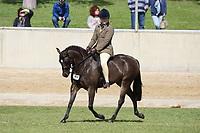 Hunter Pony over 13 NE 13.2hh