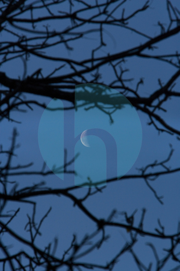 20080131_Periyar, India_ A crescent moon can be seen through the trees of the Periyar Wildlife Sancuary in the Southern Indian state of Kerala.  Photographer: Daniel J. Groshong/Tayo Photo Group