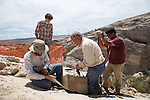 1307-23 0842.CR2<br /> <br /> Brooks Britt- Protoschian (relative of the crocodile) discovery at the Saints and Sinner Quarry, near Jensen, Utah.<br /> Students-BYU student Bart Yeates (curly hair), DNM interns Garrison Loope (beard) and Phil Varela (dark hair).<br /> <br /> July 19,  2013<br /> <br /> Photography by Mark A. Philbrick/BYU Photo<br /> <br /> Copyright BYU Photo 2013<br /> All Rights Reserved<br /> photo@byu.edu  (801)422-7322