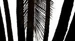 USA, Hawaii, palms, Punalu'u Beach