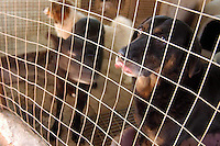 Cani abbandonati e ricoverati in un canile. Abandoned dogs that living in a kennel..