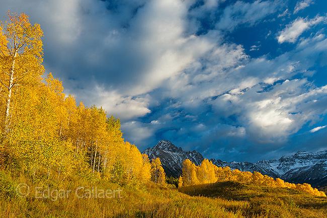 Sunset, Aspen, Populus Tremula, Mount Sneffels, Dallas Divide, Uncompahgre National Forest, Colorado