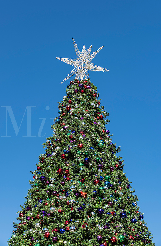 Large outdoor Christmas tree with decorations and star.
