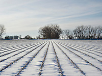 Farm land and pheasant habitat near Grand Island, Nebraska, Sunday, December 4, 2011.