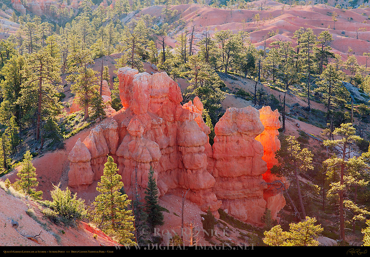 Queen's Garden Landscape at Sunrise, Sunrise Point, Bryce Canyon National Park, Utah