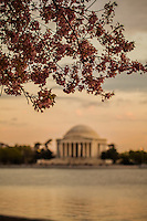Blossoms by the Monument