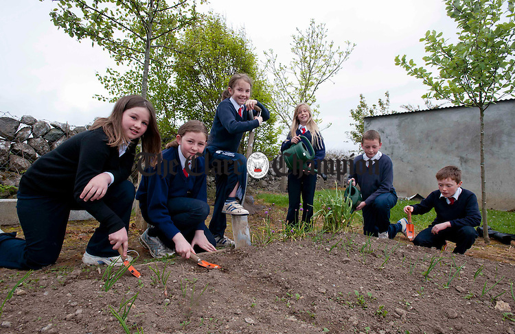 Starting work in the garden at New Quay National School. Photograph by Declan Monaghan