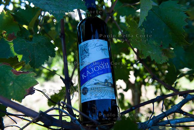 Albania - Shkodër nel villaggio di Shtoj, Nazmi Kajoshi produce un vino rosso di uva Kallmet un uva locale. Nei vigneti si notano ancora le punte delle lance in difesa da un eventuale attacco dal cielo costruite durante la dittatura di Enver Hoxha