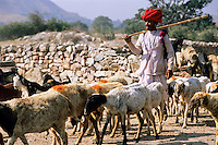 India, Rajasthan, near Udaipur: Rural scene of shepherd and goats on way to market | Indien, Rajasthan, bei Udaipur: Hirte mit Ziegenherde auf dem Weg zum Markt