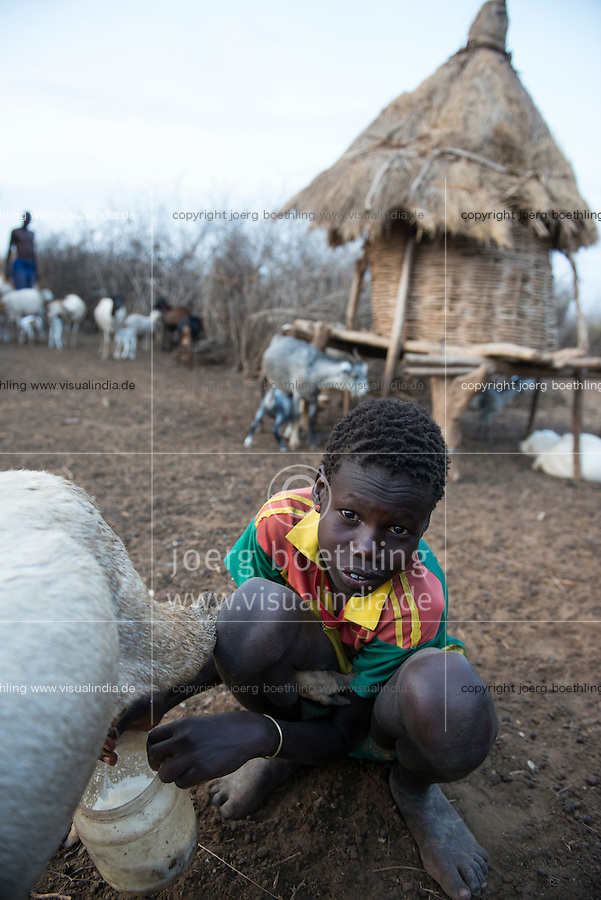 ETHIOPIA, Southern Nations, Lower Omo valley, Kangaten, village Kakuta, Nyangatom tribe, boy milking goats / AETHIOPIEN, Omo Tal, Kangaten, Dorf Kakuta, Nyangatom Hirtenvolk, Junge melkt Ziegen