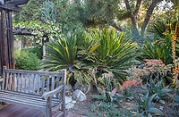 Sago Palm, Cycas revoluta,behind bench in demonstration garden patio in Los Angeles Botanic Garden