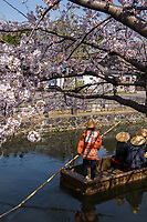 Japan, Okayama Prefecture, Kurashiki. Tourist boat on the river with cherry blossoms.