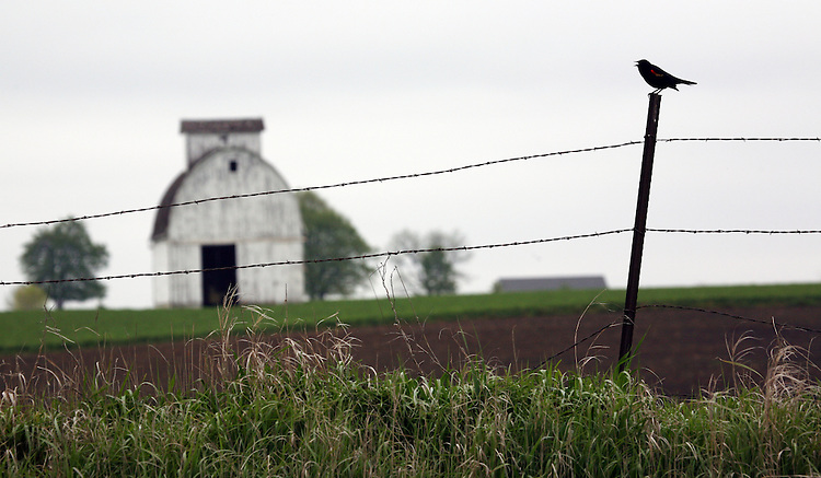 barn with bird on fence in Iowa