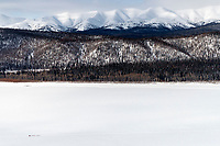 A dog team is but a small speck as they travel on the Yukon River between Grayling and Eagle Island on Saturday, March 10th during the 2018 Iditarod Sled Dog Race -- Alaska<br /> <br /> Photo by Jeff Schultz/SchultzPhoto.com  (C) 2018  ALL RIGHTS RESERVED