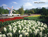 Tom Mackie, FLOWERS, photos, 4x5, 5x4, beautiful, bloom, blooming, blossom, blossoms, Britain, British, calendar, color, coloTulip Gardens & Windmill, Springfields Gardens, Spauld, GBTM881279-1,#F# Garten, jardín