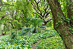 The jungle at Honolua Bay on the island of Maui, Lahaina, HI, USA