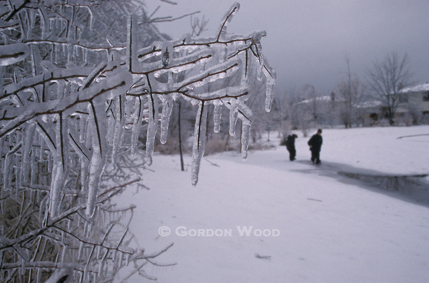 Ice Storm Aftermath on Tree - Children in background