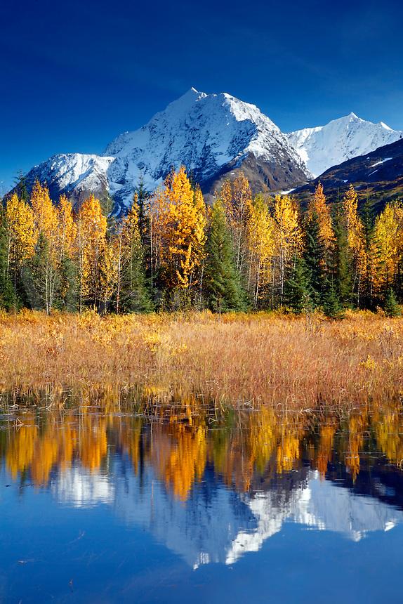 Autumn in Alaska.  Kenai Peninsula, Chugach National Forest.