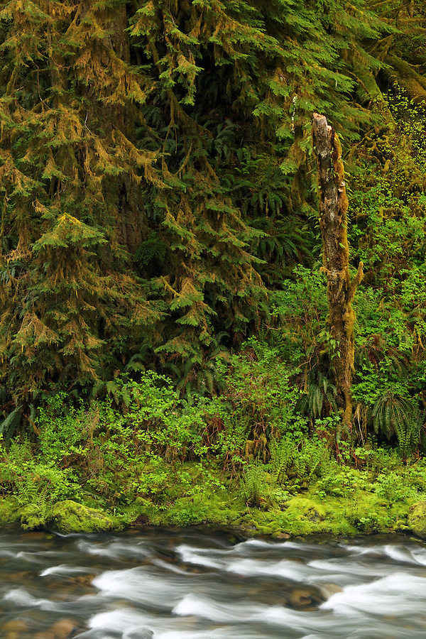 Eagle Creek running through old growth rainforest, Eagle Creek Recreation Area, Columbia River Gorge National Scenic Area, Oregon, USA