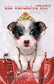 Samantha, ANIMALS,  photos,+dogs,++++,AUKPLP073A,#A# Humor, lustig, divertido