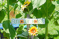 Sunflower house sign in garden, Yarmouth ME