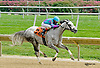 Sweet Maxine winning at Delaware Park on 8/20/14