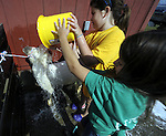 Rachel Larosa, 11, of Enfield, foreground, and Sophie Jones, 8, of Somers,  dump a bucket of water on Larsoa's sheep named Buddy, while washing him for showing,  during the annual Hartford County 4H Fair at the Four Town Fair Grounds in Somers, the fair runs through the weekend. (Jim Michaud / Journal Inquirer)