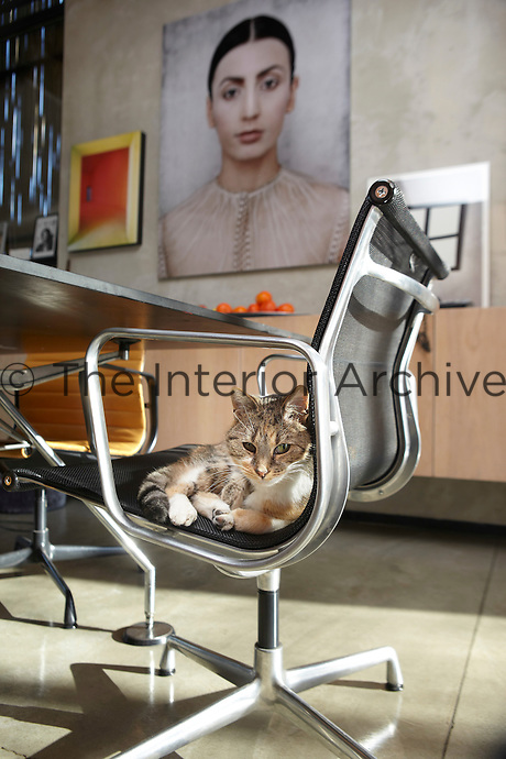 A handsome cat sits on a classic Eames chair.
