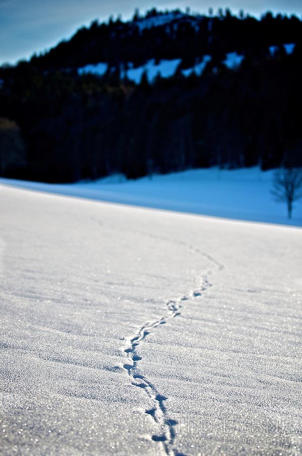 Shoe-shoe tracks leading into a snowy field