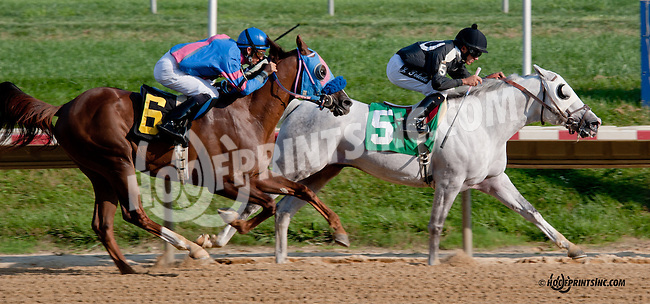 Aim Hi winning at Delaware Park on 8/21/13