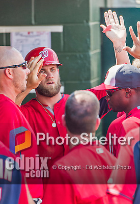 20 March 2015: Washington Nationals outfielder Bryce Harper returns to the dugout after hitting a solo home run during Spring Training action against the Houston Astros at Osceola County Stadium in Kissimmee, Florida. The Nationals defeated the Astros 7-5 in Grapefruit League play. Mandatory Credit: Ed Wolfstein Photo *** RAW (NEF) Image File Available ***