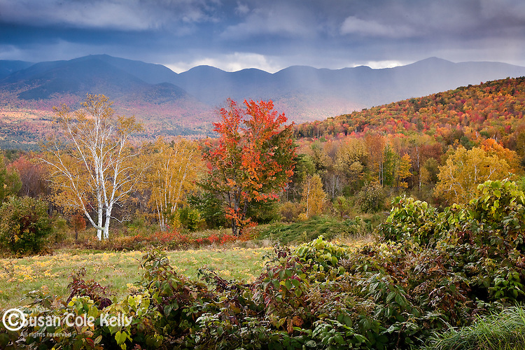 Fall foliage, Sugar Hill, White Mountains, NH