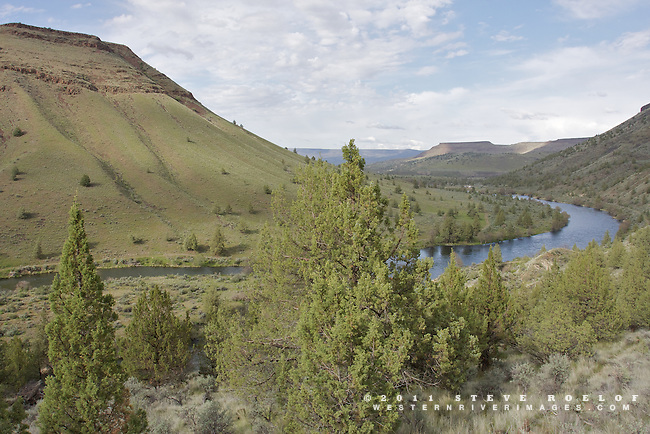 The green of spring along the Deschutes River, Oregon.