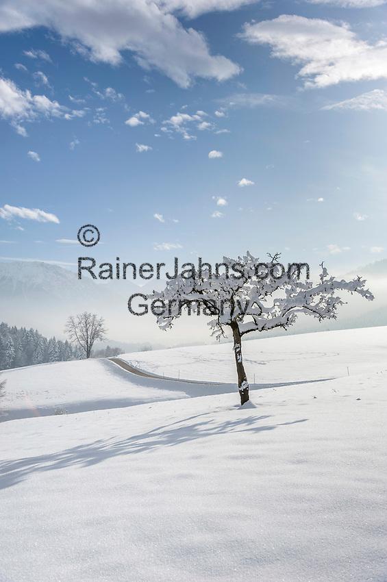 Deutschland, Oberbayern, Chiemgau, zwischen Siegsdorf und Ruhpolding: Winterlandschaft | Germany, Upper Bavaria, Chiemgau, between Ruhpolding and Siegsdorf: winter scenery